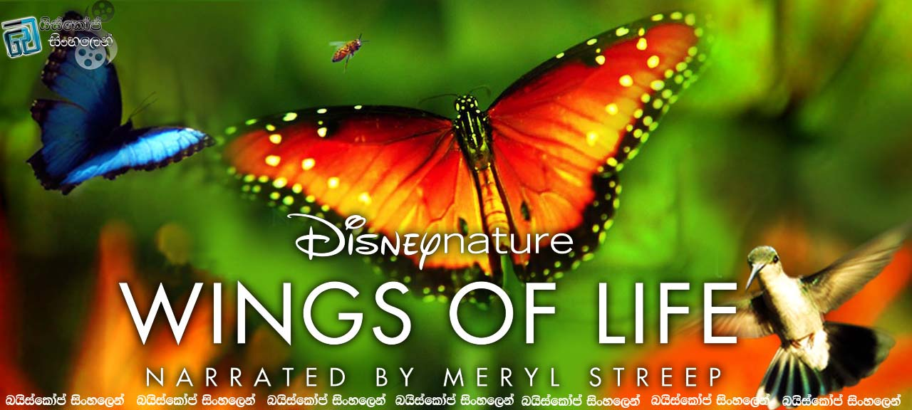 Wings of Life 2011